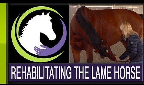Rehabilitating the Lame Horse: Mind, Body & Spirit – Part Four of a Four Part Series