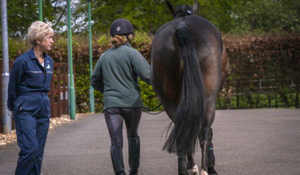 Research revealed – Ridden Horse Pain Ethogram