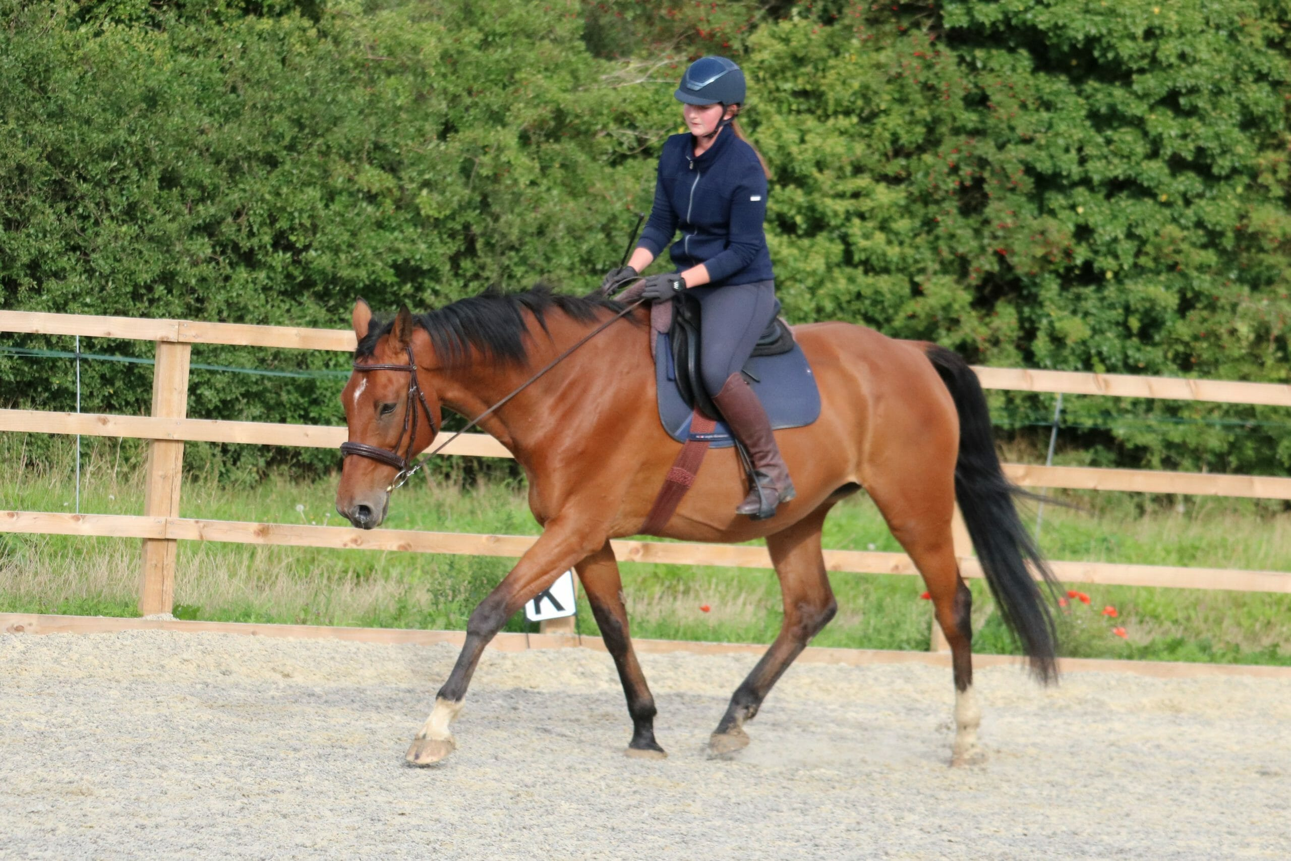 Posture training for your horse - what to look for