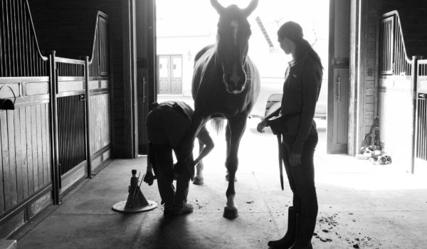Choosing like minded professionals for your equine team
